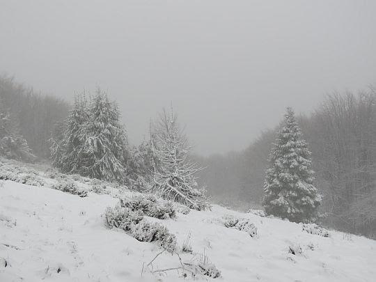 Dzisiaj są na polanie tylko takie widoki, cudownie zimowe.