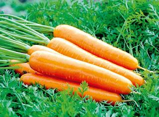 Buah dan Sayuran untuk Diet Menurunkan Berat Badan 1 - Wortel