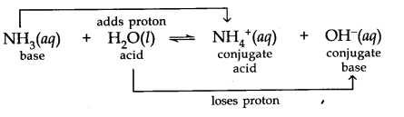 equilibrium chemistry class 11 notes pdf