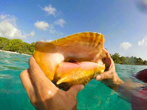 Photo Tour: Snorkeling St. John - Style Jaunt by Katarina Kovacevic