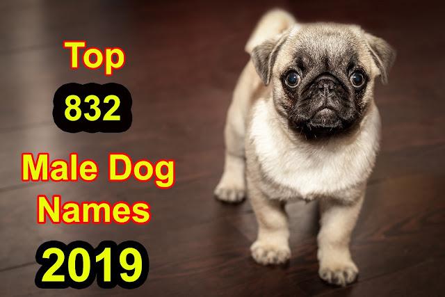 https://www.maledognames.xyz/2019/10/cute-dog-names.html