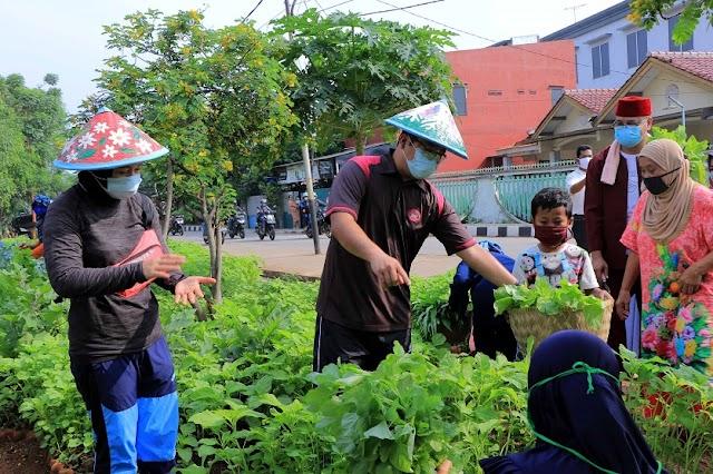 Walikota Panen Sayuran Di Ecofarm Mekarsari Bersama Warga