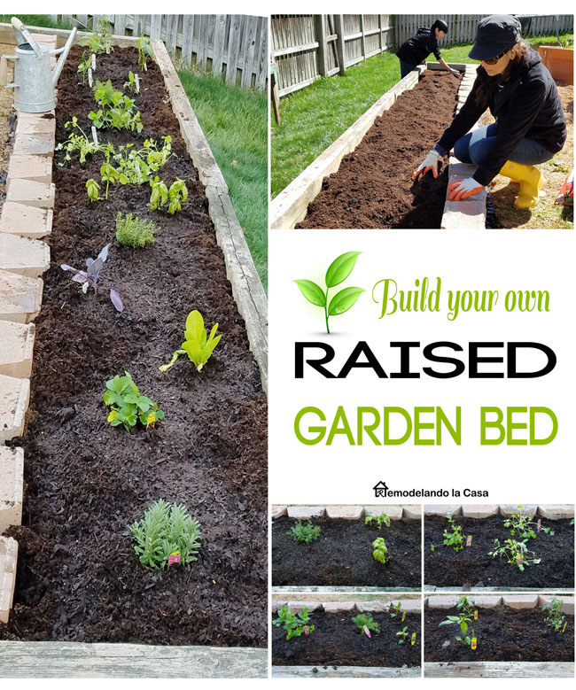 vegetable garden diy