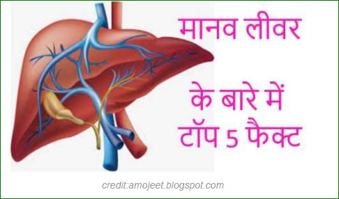 Top-5-facts-related-to-human-liver-in-hindi
