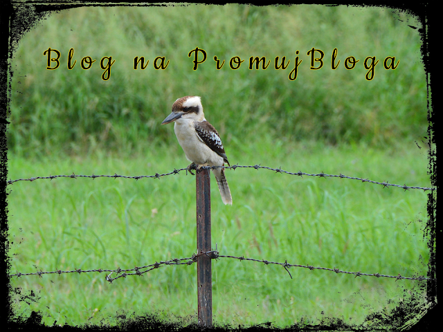 Relewantna - Blog na PromujBloga