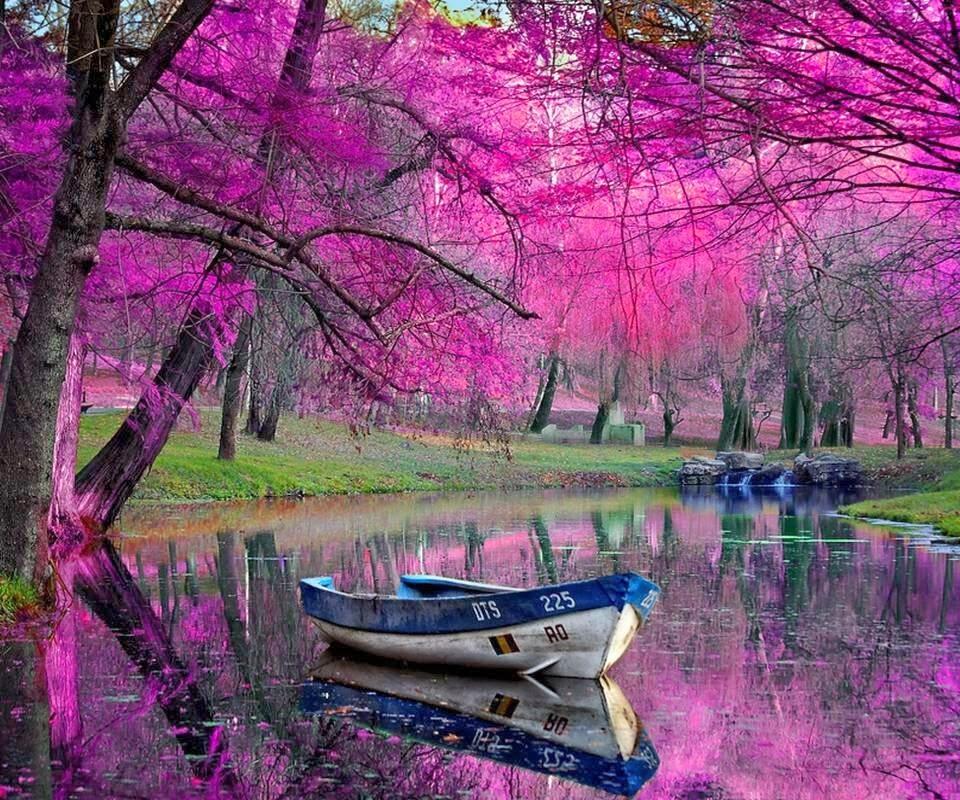 Beautiful Natural HD wallpapers ~ Allfreshwallpaper