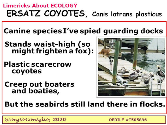 limerick; coyote; Canis latrans; scarecrow; South Carolina; dock; waterfowl; Giorgio Coniglio