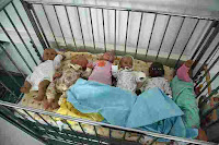Sextuplets end six years of barrenness