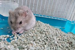 Ini Dia Harga Pasir Zeolit untuk Hamster Termurah!
