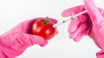 Os OGMs são prejudiciais, devem ser evitados a todo custo - estudo