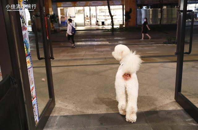 蒙古紅店狗