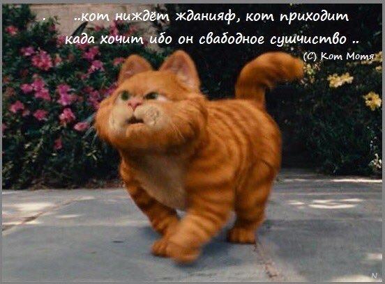 Блог Кота Моти  - Страница 3 EyiHvPfWgAUbAL5