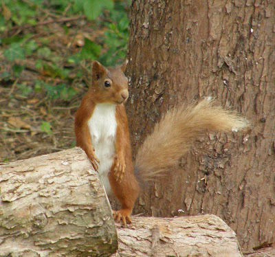The View From Bag End: For Squirrel fans