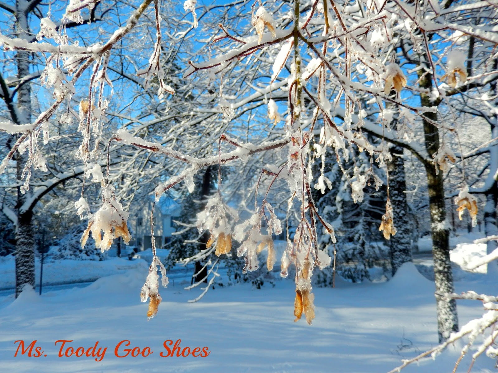 Winter Scenes --- Ms. Toody Goo Shoes