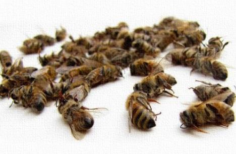 Μελισσοκομία: Να κηρυχτεί σε κατάσταση έκτακτης ανάγκης ο κλάδος ζητούν οι Ιταλοί
