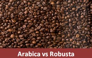 Perbedaan Kopi Arabica dan Robusta