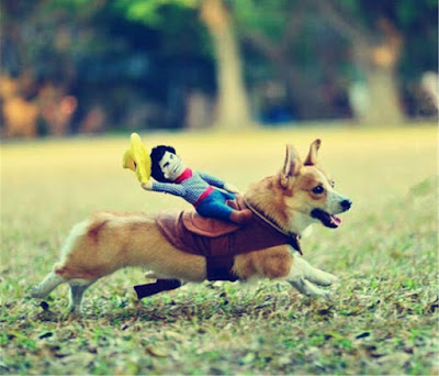 rodeo cowboy riding a dog awesome pet costume for halloween