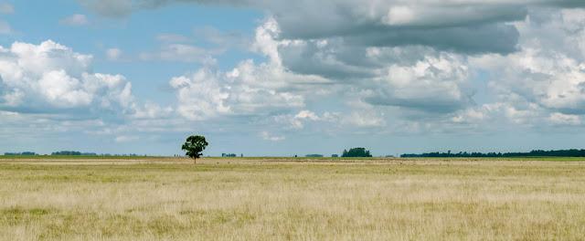 Paisaje campestre con un único árbol en la llanura con cielo con nubes.