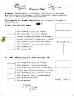 Monohybrid Cross Practice Problems Worksheet ...