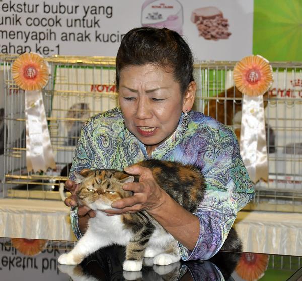 Bagaimana Menyiapkan kucing untuk cat show    b26b1ced99