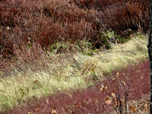 stripes of grass and shrubs