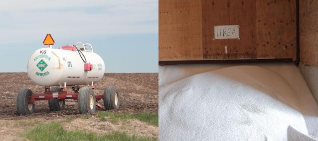 How should rising nitrogen fertilizer prices corn farmers 2022 growing season