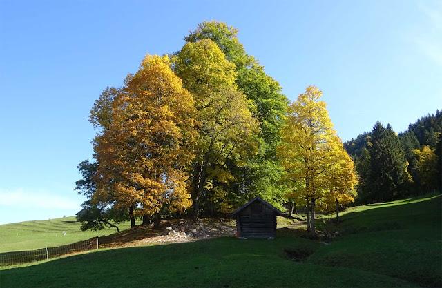 Bunte Laubbäume, Holzhütte und Schafe auf der Weide