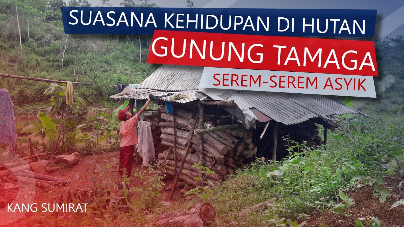 Suasana Kehidupan Di Hutan Gunung Tamaga Cianjur