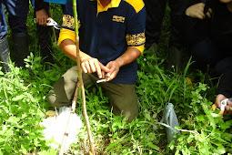 Teknik-teknik atau cara okulasi pada tanaman karet