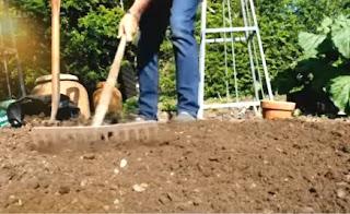 Alan Titchmarsh raking his vegetable garden