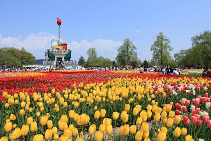 Taman Bunga Tulip Terbesar di Dunia
