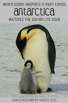Learn about polar animals as you explore and play with Safari Ltd Antarctica toob.  Free printable matching cards for the toob.