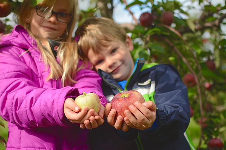 Fall Bucket List: Apple Picking | My Darling Days