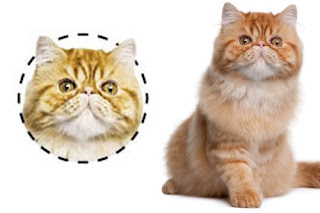 Cats Facial Expression Upward Kind Influence On Its Character? | Anatomy Of A Cat