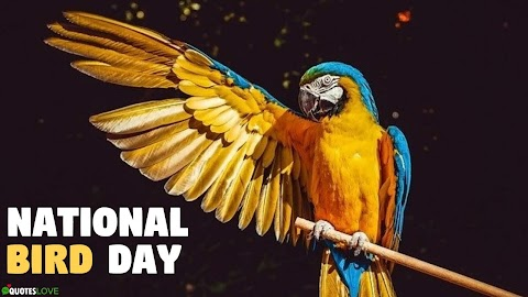 53+ (Best) National Bird Day 2021: Quotes, Wishes, Status, Messages, Images