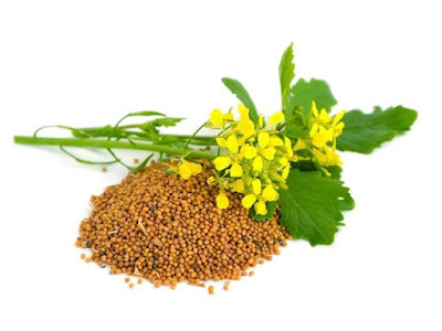 Mustard promotes digestion, by enhancing secretion of saliva and digestive juices, so with a caution must be used by people with the ulcer on the stomach or with a sensitive stomach, because it can cause pain and cramping.