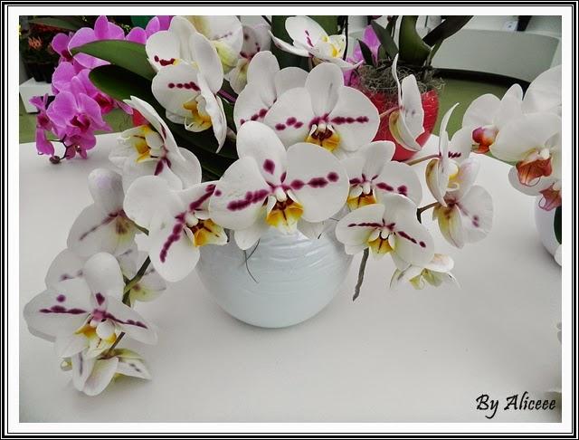 orhidee-albe