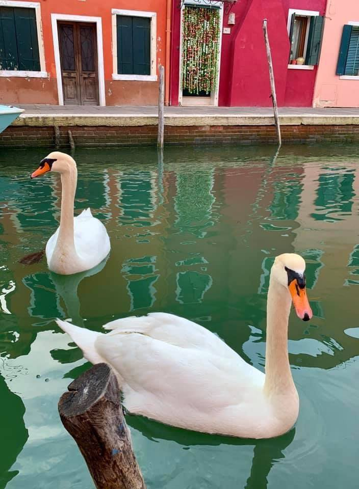 Venice Canals, Swan