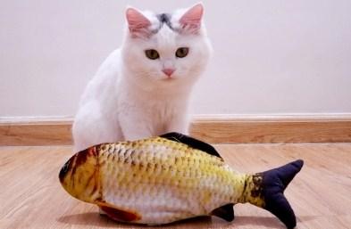 17 Arti Mimpi Lihat Kucing Makan Ikan Kakap Menurut Primbon Jawa Terlengkap
