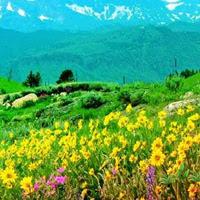 WowEscape-Flower Peak Valley Escape