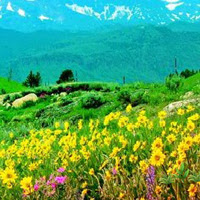 WowEscape-Flower Peak Val…