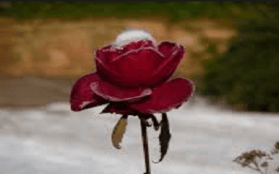 Puisi tentang cinta terpendam