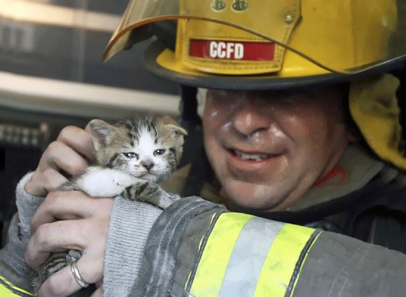 Спасите котенка картинка собрали красивые