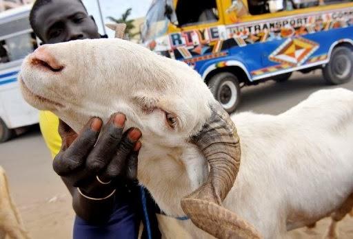 Edan, Orang-Orang Ini Menikah Dengan Hewan