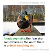 Anatidaephobia:The fear that somewhere in the world there is a duck watching you.