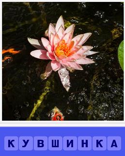 на воде растущая кувшинка распустилась