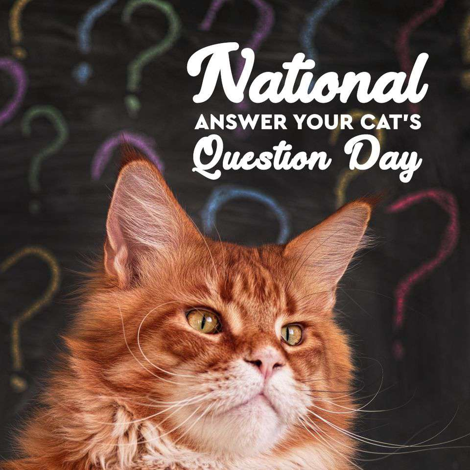 National Answer Your Cat's Questions Day Wishes for Whatsapp