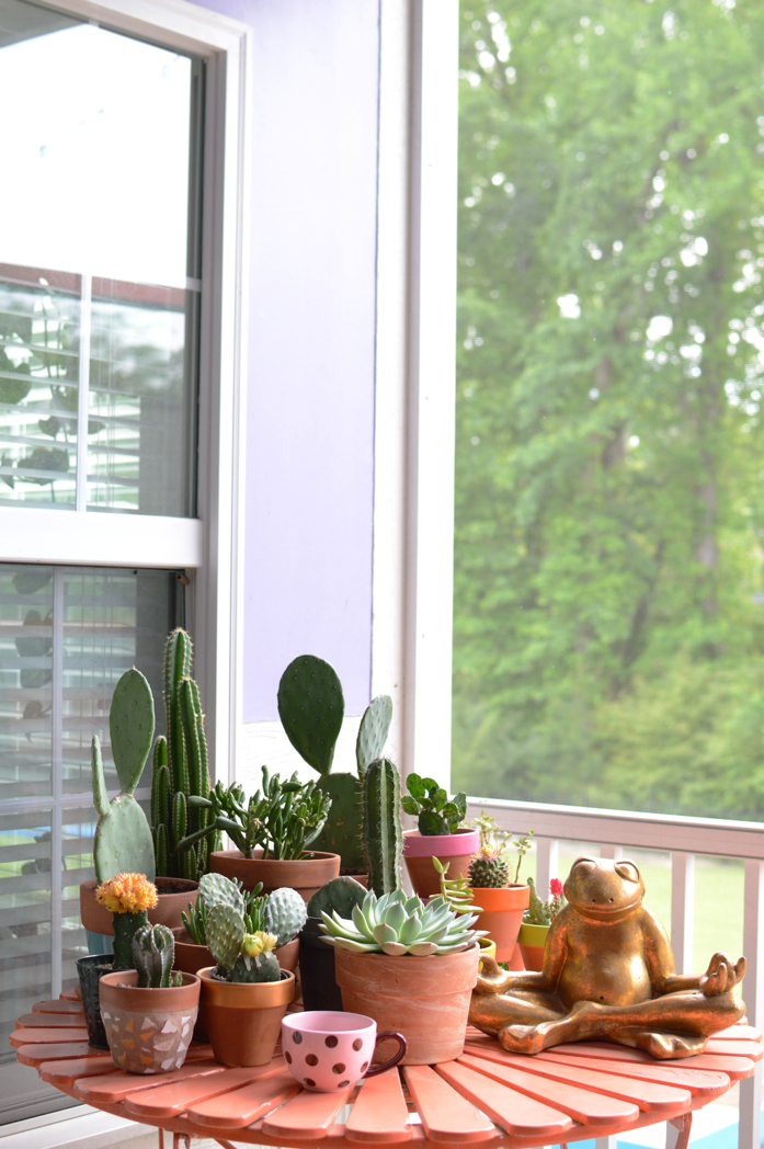 Succulents in A Grouping