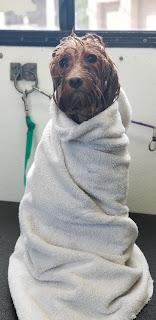 dog bathing in progress in Queen Creek, AZ