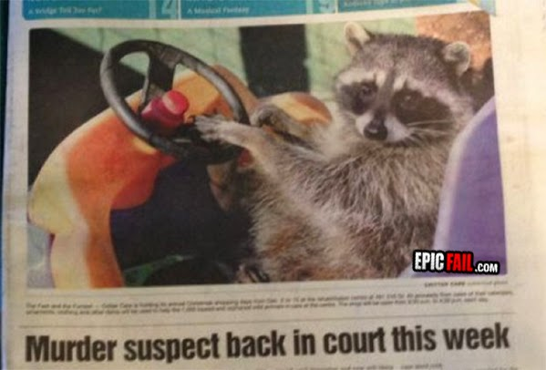 picture of raccoon driving kids plastic toy car funny